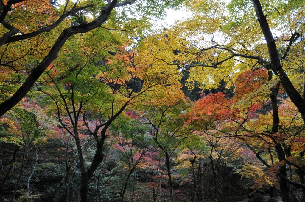 Dazaifu Garden